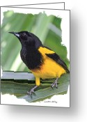 Oriole Digital Art Greeting Cards - Black-cowled Oriole Greeting Card by Larry Linton