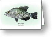 Game Drawings Greeting Cards - Black Crappie Greeting Card by Ralph Martens