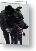 Panting Dog Greeting Cards - Black Dog Panting Greeting Card by The Plummer-Kennedy Conspiracy