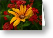 Susan Greeting Cards - Black-eyed Susan and Yarrow Greeting Card by Steve Augustin