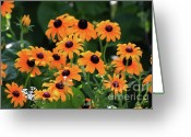Black Eyed Susans Greeting Cards - Black Eyed Susan Floral 2 Greeting Card by Marjorie Imbeau
