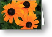 Black Eyed Susans Greeting Cards - Black-Eyed Susan Floral 3 Greeting Card by Marjorie Imbeau