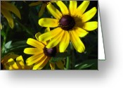 Flowers Floral Greeting Cards - Black eyed Susan Greeting Card by Mary-Lee Sanders