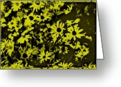 Black Eyed Susans Greeting Cards - Black Eyed Susans Greeting Card by Bill Cannon