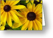 Susan Greeting Cards - Black-eyed Susans Close Up Greeting Card by Suzanne Gaff
