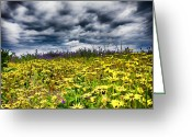 Black Eyed Susans Greeting Cards - Black Eyed Susans Galore Greeting Card by Douglas Barnard