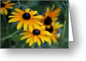 Black Eyed Susans Greeting Cards - Black-Eyed Susans Greeting Card by Sabrina L Ryan