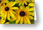 Giclee Photo Greeting Cards - Black Eyed Susans Greeting Card by Suzanne Gaff