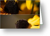 Honey Bee Greeting Cards - Black Eyes and Bees Diptych Greeting Card by Lisa Knechtel