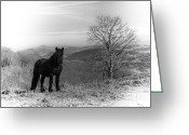 Caballo Greeting Cards - Black horse in Zalama Greeting Card by Fernando Alvarez