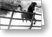 Black And White Animal Greeting Cards - Black horse looking at me Greeting Card by Filomena Francisco