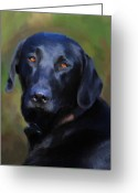 Black Lab Greeting Cards - Black Lab Portrait Greeting Card by Jai Johnson