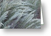 Black Mesa Greeting Cards - Black Mesa Grasses Greeting Card by Fred Lassmann