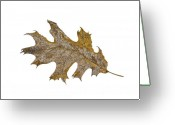 Oak Leaf Drawings Greeting Cards - Black Oak Leaf Greeting Card by Judy Cheryl Newcomb