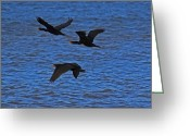 Mundesley Greeting Cards - Black on blue Greeting Card by Camera Rustica Bill Kerr
