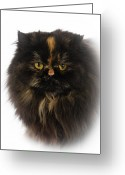Persian Greeting Cards - Black Persian Greeting Card by www.WM ArtPhoto.se
