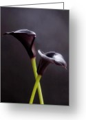 Botanical Greeting Cards Prints Greeting Cards - Black Purple Calla Lilies # 1 - Macro Flowers Fine Art Photography Greeting Card by Artecco Fine Art Photography - Photograph by Nadja Drieling