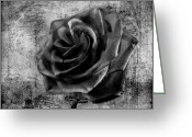 David Dehner Greeting Cards - Black Rose Eternal  BW Greeting Card by David Dehner