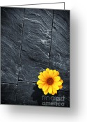 Ancient Architecture Greeting Cards - Black Schist Flower Greeting Card by Carlos Caetano