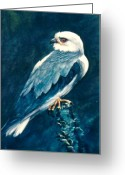 Black Kites Greeting Cards - Black Shouldered Kite Greeting Card by Rita Palm