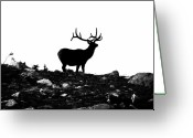 Black Elk Greeting Cards - Black Stag Greeting Card by Kevin Munro