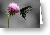 Susan Stevens Crosby Greeting Cards - Black Swallowtail with Thistle Greeting Card by Susan Stevens Crosby