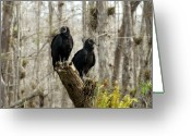 Florida Swamp Greeting Cards - Black vultures Greeting Card by David Lee Thompson