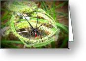 Black Widow Greeting Cards - Black Widow Greeting Card by Adam Coleman