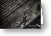 Black Widow Greeting Cards - Black Widow Greeting Card by Jeremy Linot