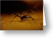 Black Widow Greeting Cards - Black Widow Greeting Card by Kris Napier