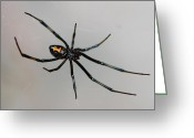 Black Widow Greeting Cards - Black Widow Greeting Card by Paul Marto