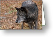 Watchful Eye Greeting Cards - Black Wolf Greeting Card by Jim DeLillo
