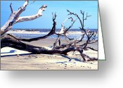 Sea Kayak Greeting Cards - Blackbeard Island Beach Greeting Card by Thomas R Fletcher