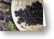 Fruit Basket Greeting Cards - Blackberries Greeting Card by Kristin Elmquist