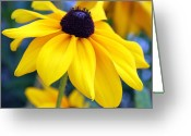 Flowerbed Greeting Cards - Blackeyed Susun Greeting Card by Evelyn Patrick