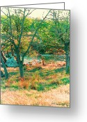 Happy Texas Artist Greeting Cards - Blanco River Texas Greeting Card by Fred Jinkins