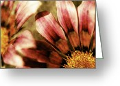 Northwest Flowers Greeting Cards - Blanket Flowers Greeting Card by Bonnie Bruno