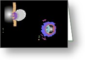 Embryogenesis Greeting Cards - Blastocyst Implantation, Artwork Greeting Card by Francis Leroy, Biocosmos