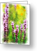 Violet Prints Greeting Cards - Blazing Star - vignette Greeting Card by Dan Carmichael