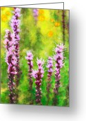 Violet Prints Greeting Cards - Blazing Star  Greeting Card by Dan Carmichael
