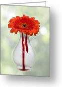 Bloody Greeting Cards - Bleeding Gerbera Greeting Card by Joana Kruse