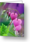 Foilage Greeting Cards - Bleeding Heart - D005135 Greeting Card by Daniel Dempster