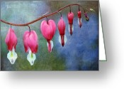 Valentine Tenderness Greeting Cards - Bleeding Heart 2 Greeting Card by Marilyn Hunt