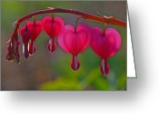 2012 Flower Calendar Greeting Cards - Bleeding Heart Greeting Card by Juergen Roth