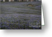 Texas Bluebonnets Greeting Cards - Blemish on Skin of Blue Greeting Card by Fred Lassmann