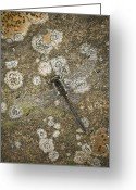 Lichen Greeting Cards - Blending In Greeting Card by Andy Astbury
