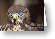 Buzzard Photo Greeting Cards - Blind Buzzard Greeting Card by Michal Boubin