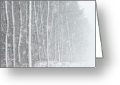 Blizzard Greeting Cards - Blizzard Blankets Trees In Snow Greeting Card by Douglas MacDonald