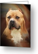 Pit Bull Greeting Cards - Blond Pit Bull by Spano Greeting Card by Michael Spano