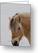 Domestic Animal Photo Greeting Cards - Blonde 2 Greeting Card by Odd Jeppesen